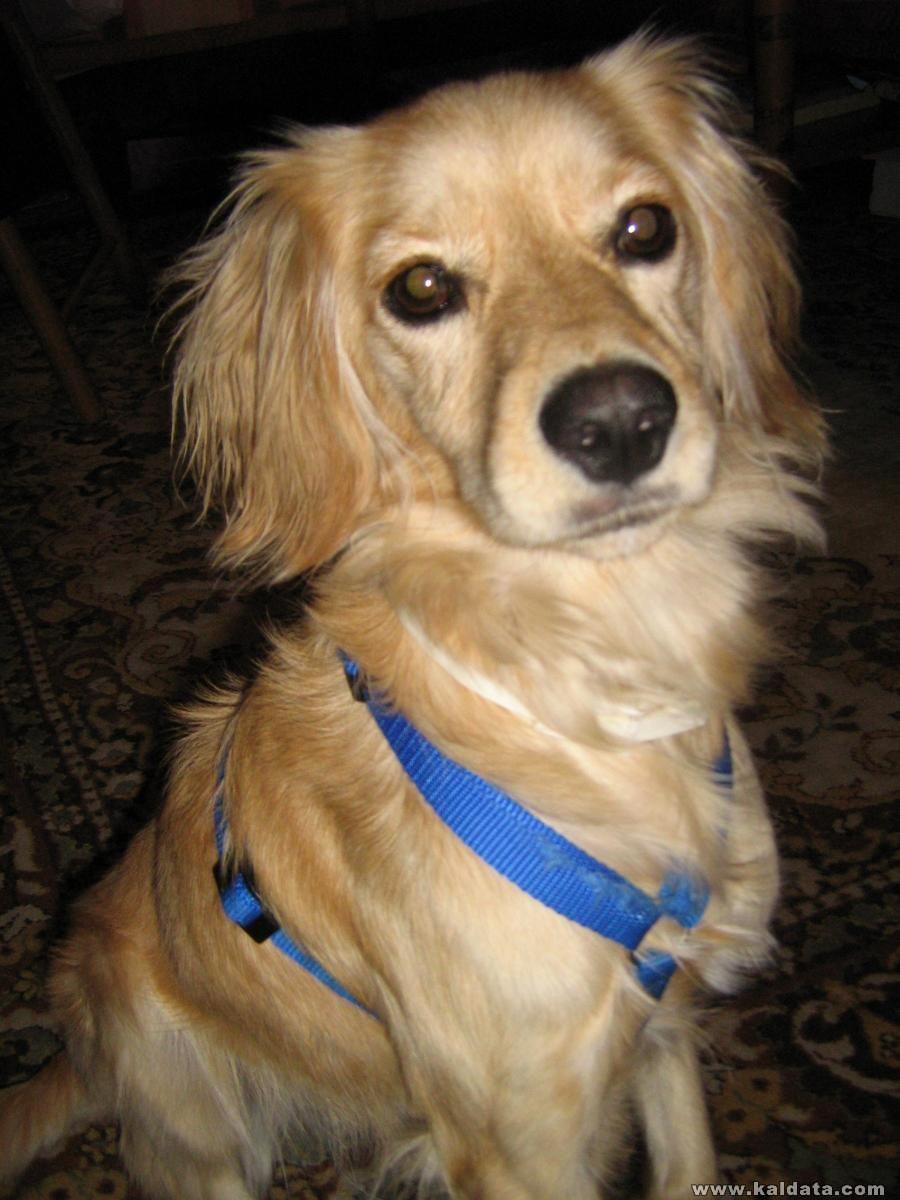 Моето куче Сара