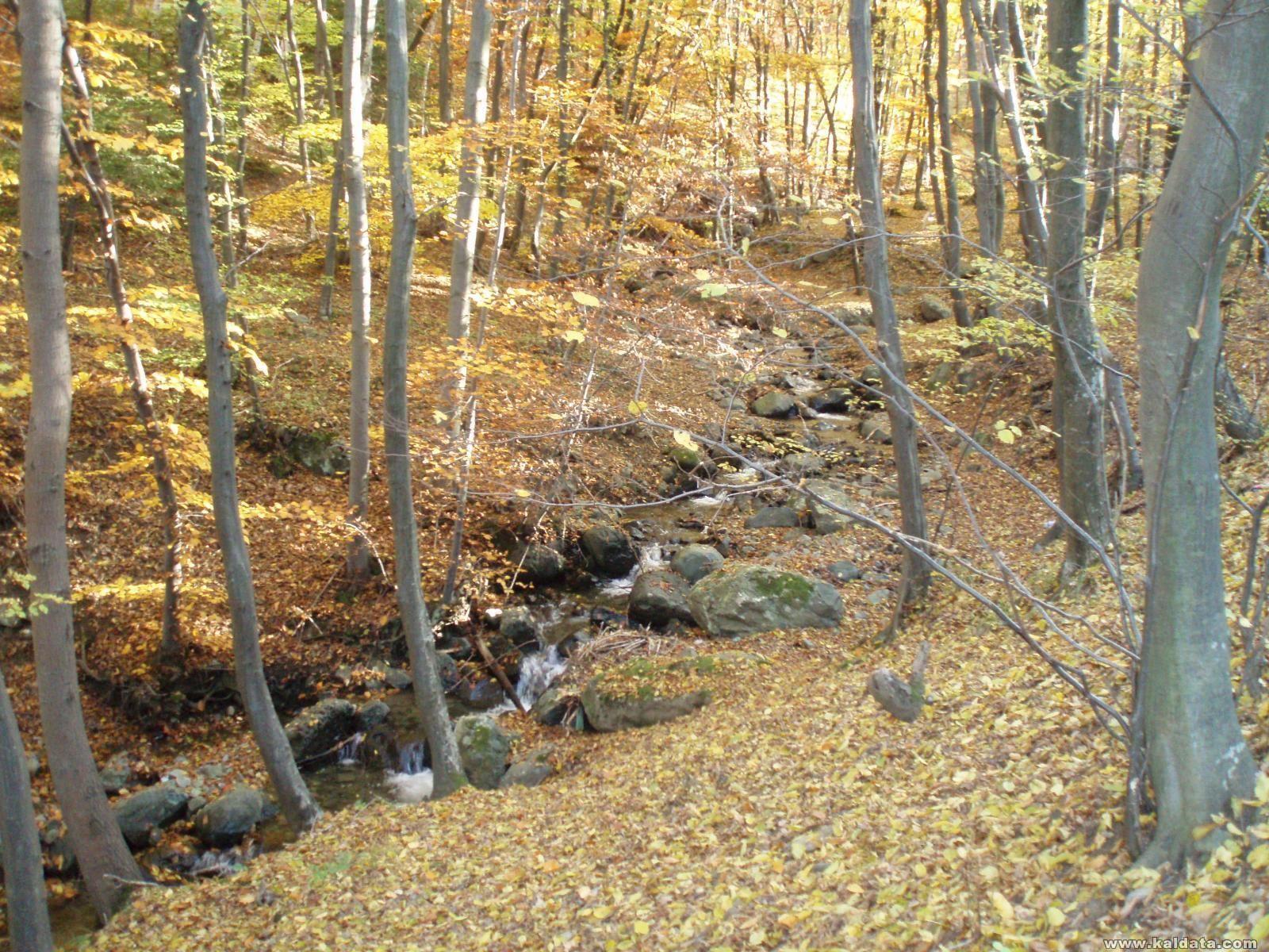 Есен в подножието на Витоша