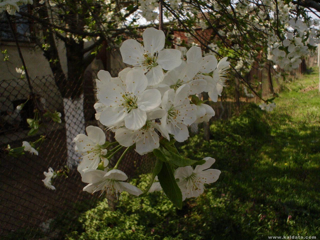 толкова е красиво през пролетта