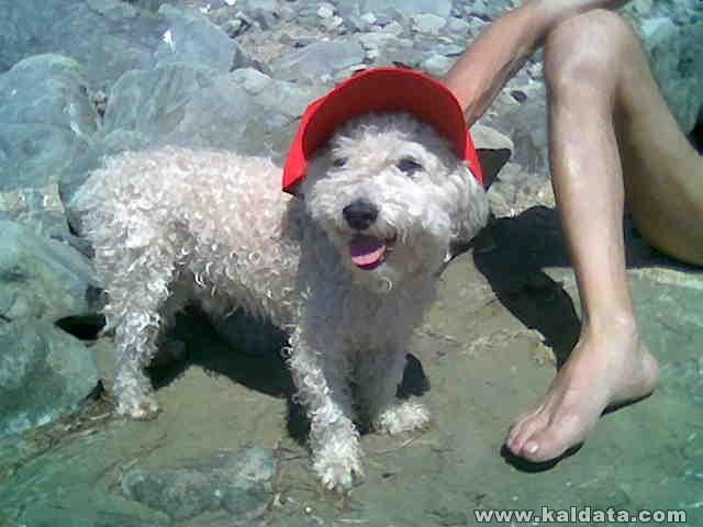 На плаж с Боби