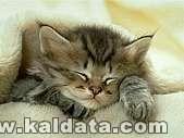 Много,много сладурско котенце