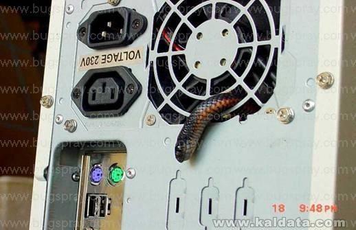 snakecomp2.jpg