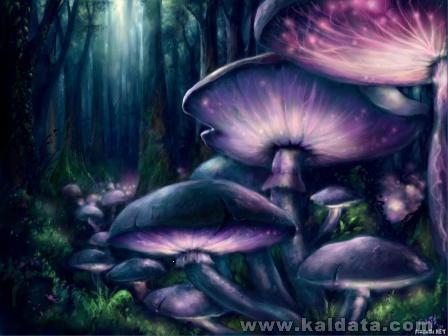 fantasy-wp11_20070305_1937430904.jpg