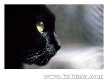 638086~Black-Cat-Looking-Out-a-Window-Posters.jpg