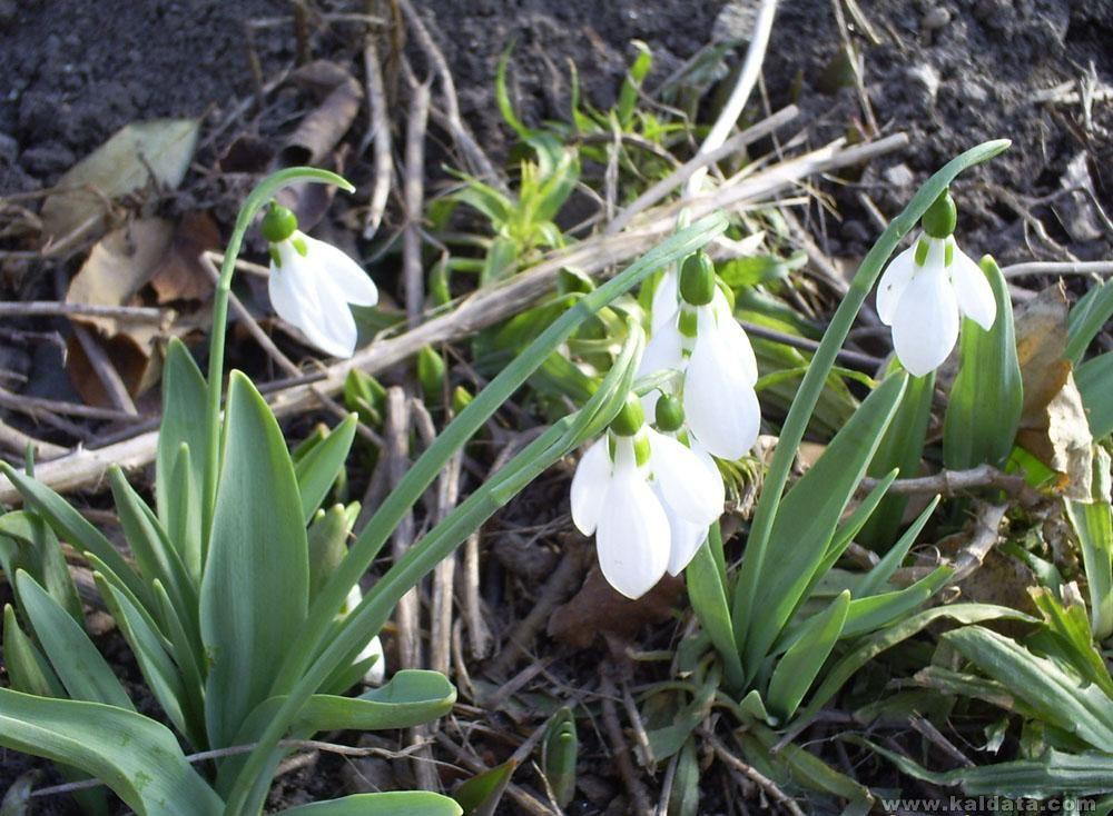 Пролет иде!