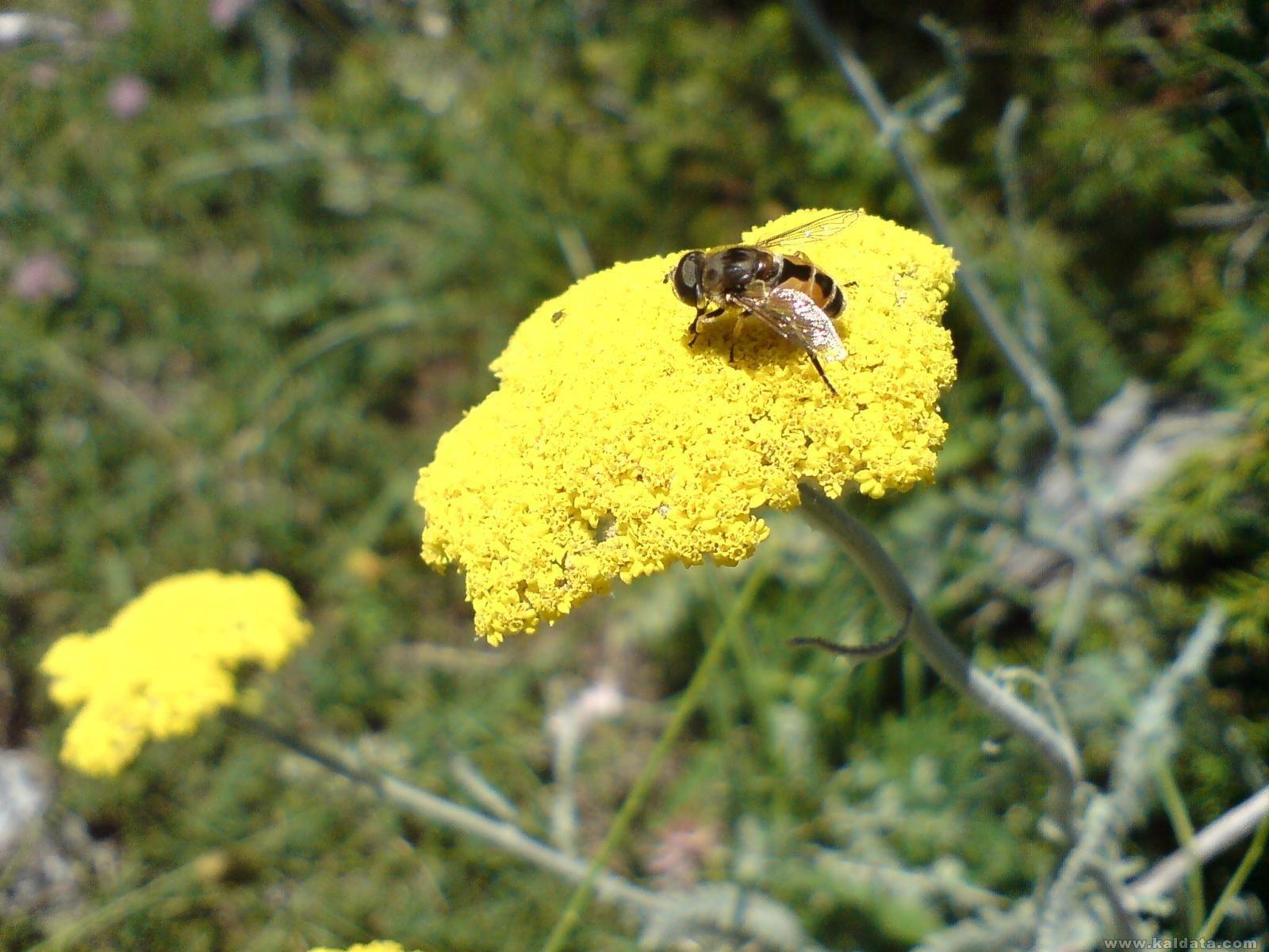 ТЯ пчелата