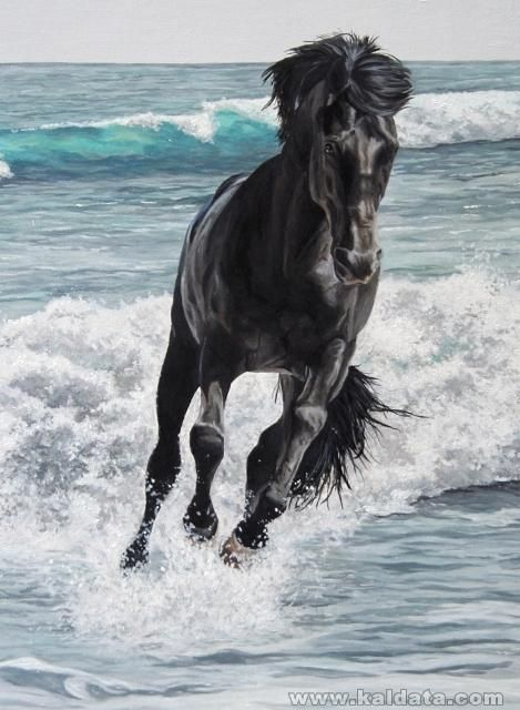 horse-pet-portrait-1-ENLARGE.jpg