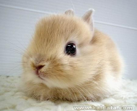 another_cute_bunny_by_m2pg_94803_4604078.jpg