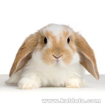 rabbit1332.jpg