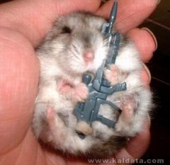 hamster_with_gun_a4850_2064872.jpg
