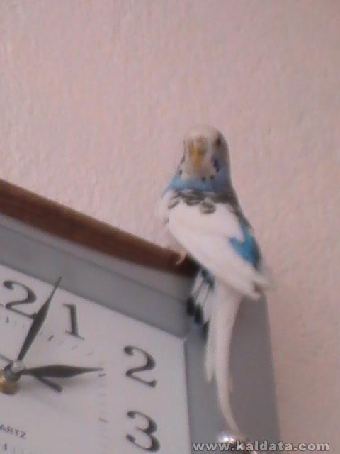 Моят мъжки папагал-Тоти