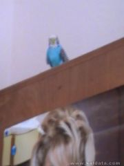 Моят Женски Папагал-Пипи