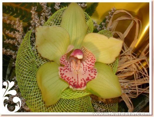 Орхидея!