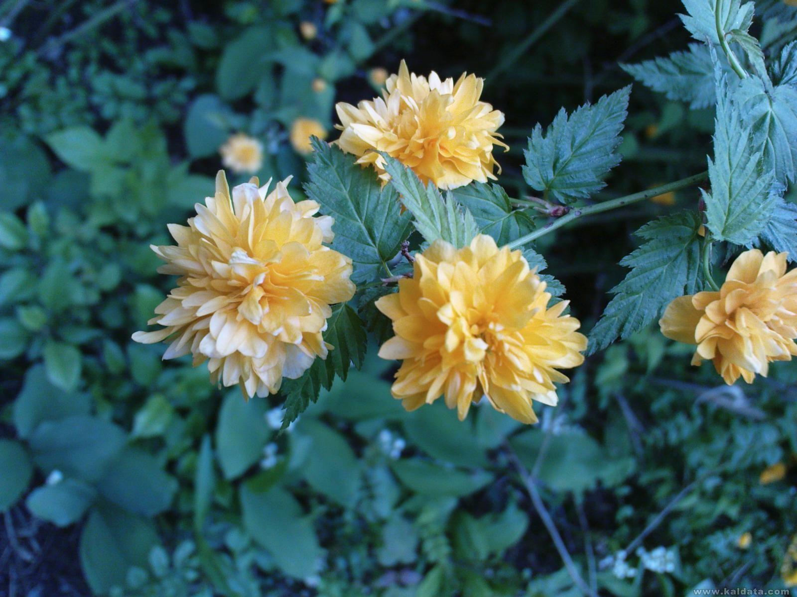 цветче от някакво храстче