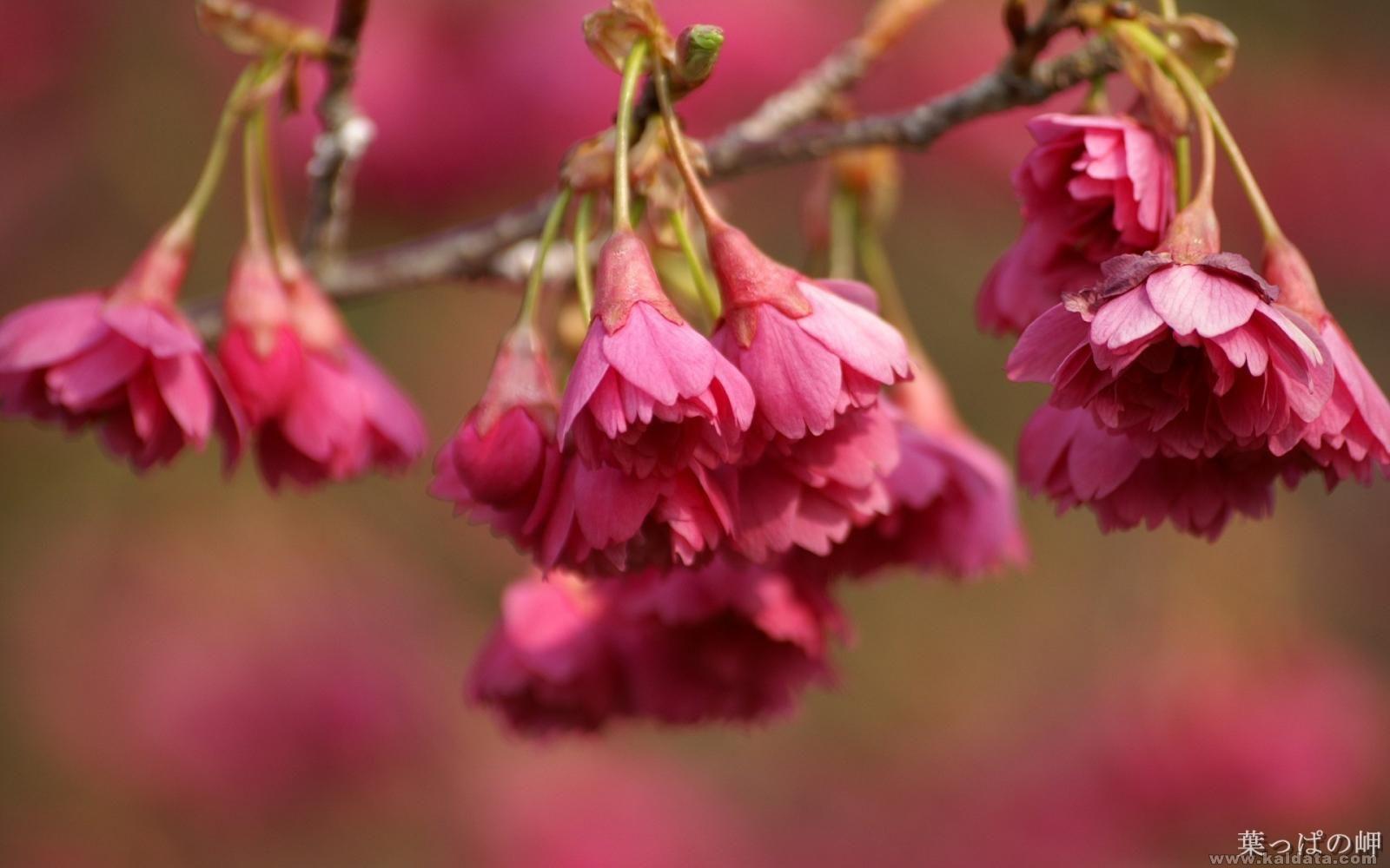 Flower (16).jpg