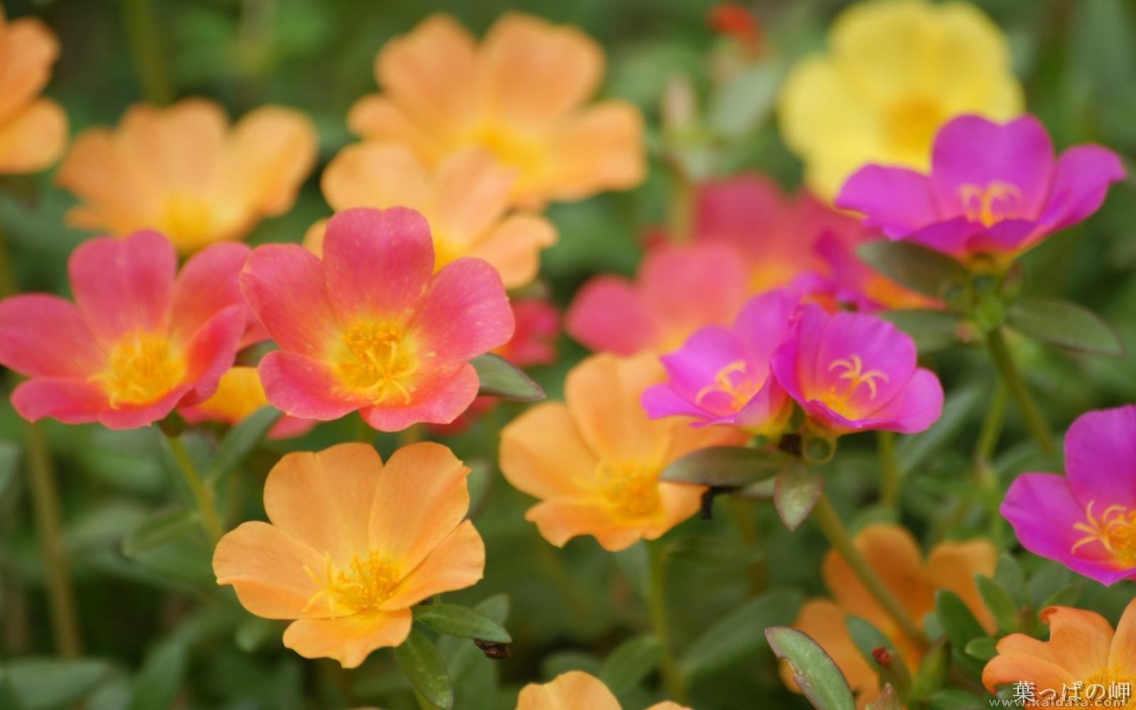 Flower (44).jpg