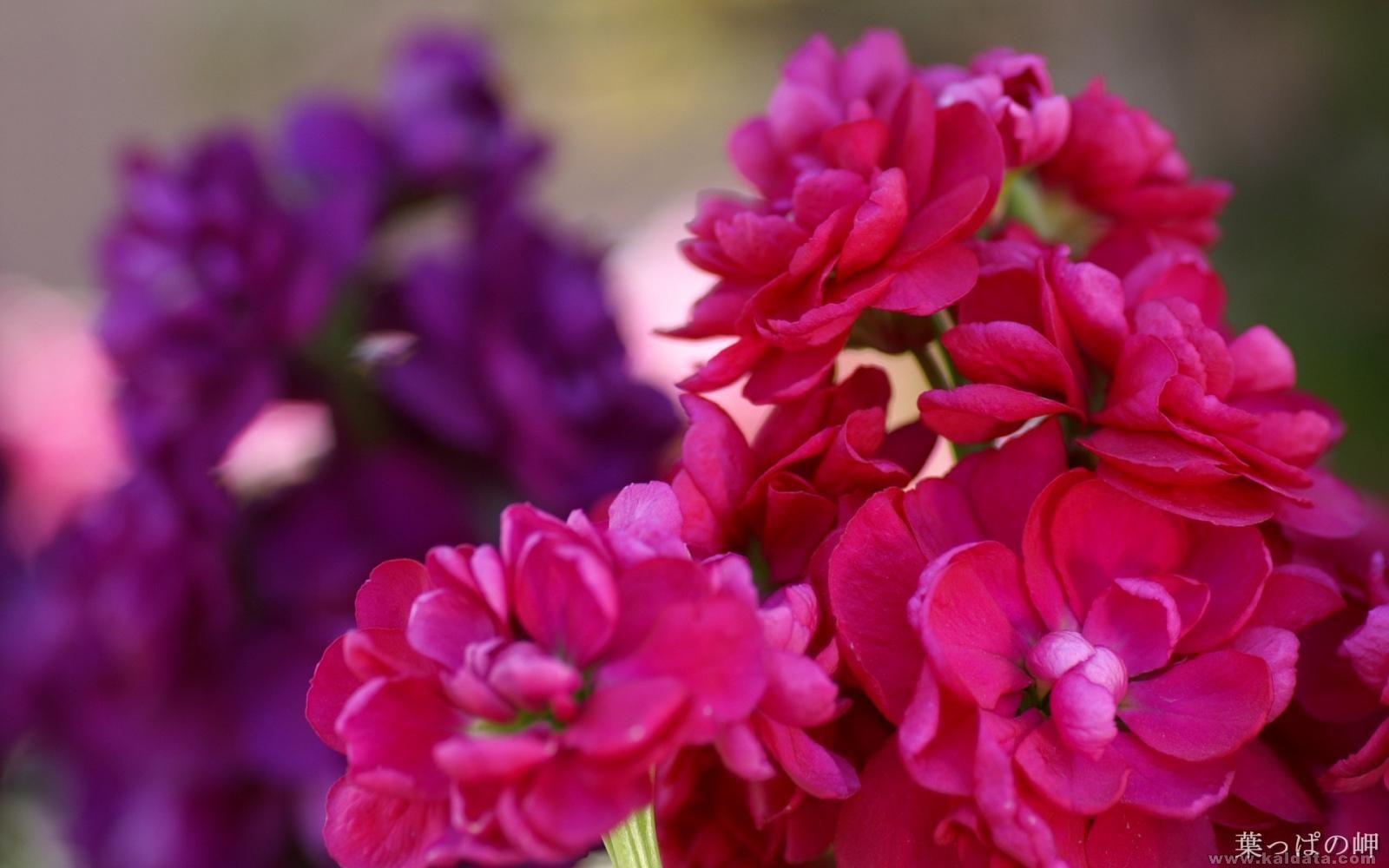 Flower (20).jpg