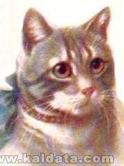 cute-cat-1.jpg