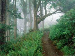 Nature (9).jpg