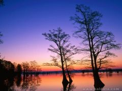 phoca_thumb_l_Bald Cypress Trees at Sunrise, Reelfoot National Wildlife Refuge, Tennessee.jpg