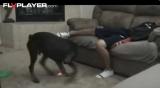 Куче, Лазер и Топки
