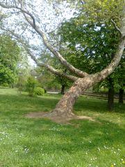 обичам Дърветата