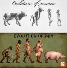evolution Of Men women (Large)
