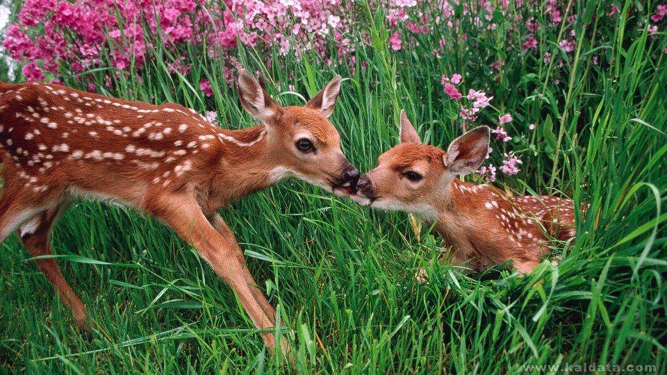 Природни красоти