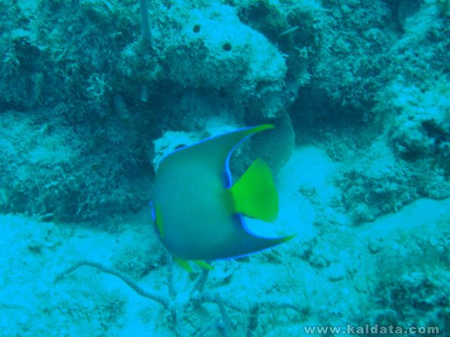 Dive Trip 2007 - Day One 015.JPG