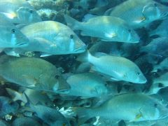 Belize Diving 5 29 009