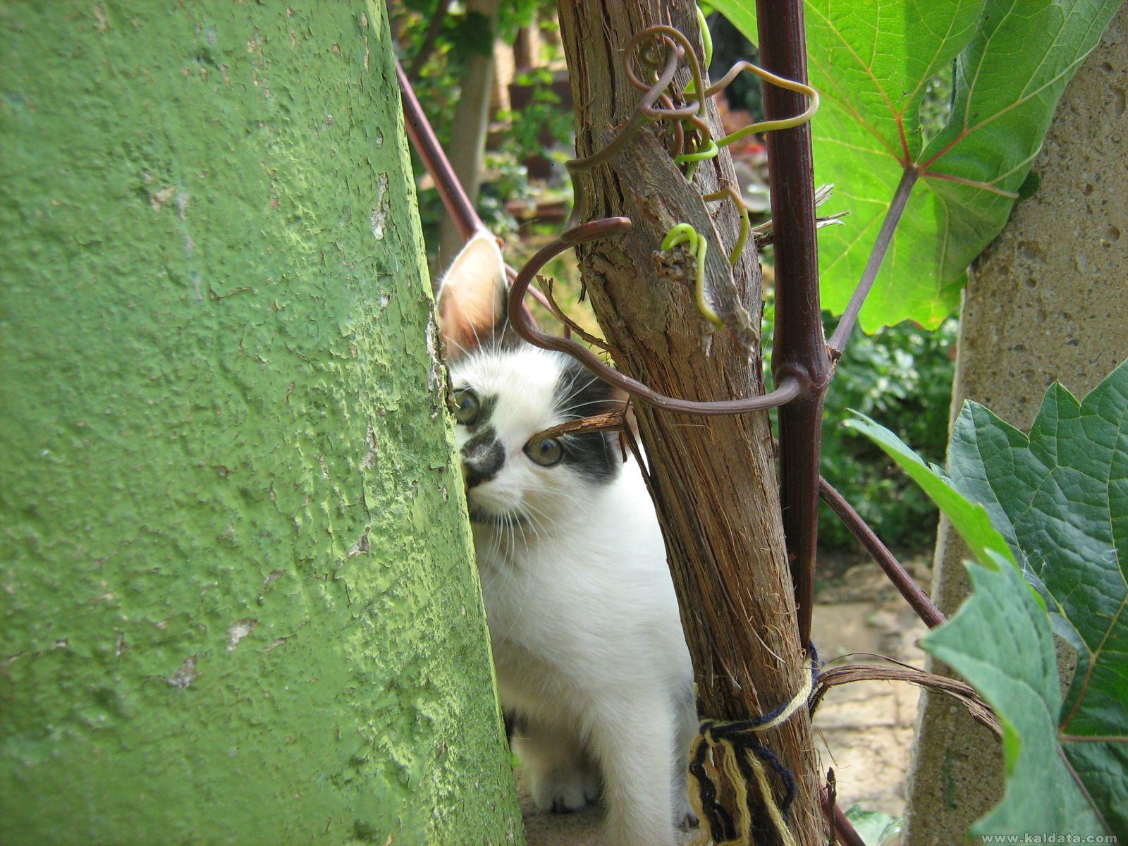 Коте което се крие