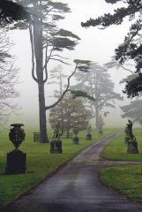 Misty Path mac.jpg