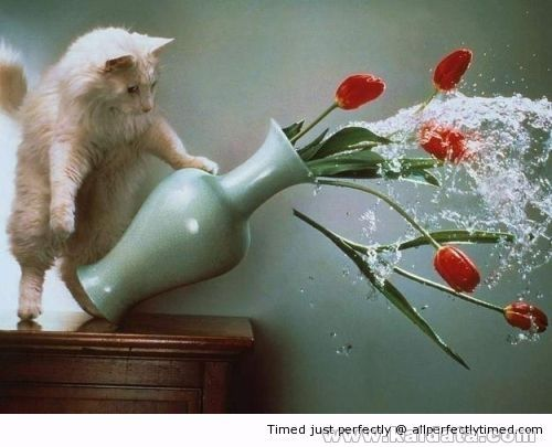 Cat dumps The water Out Of The vase resizecrop