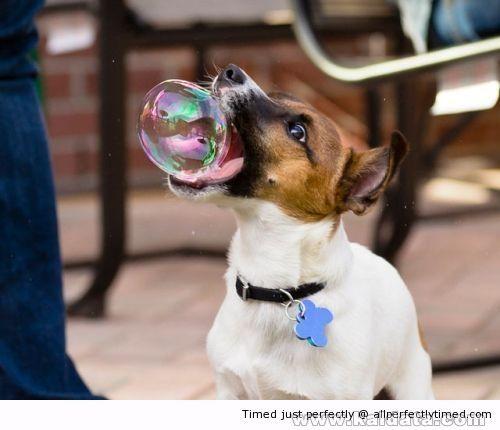 Want To Eat bubbles resizecrop