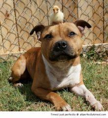 Chick made A New friend resizecrop