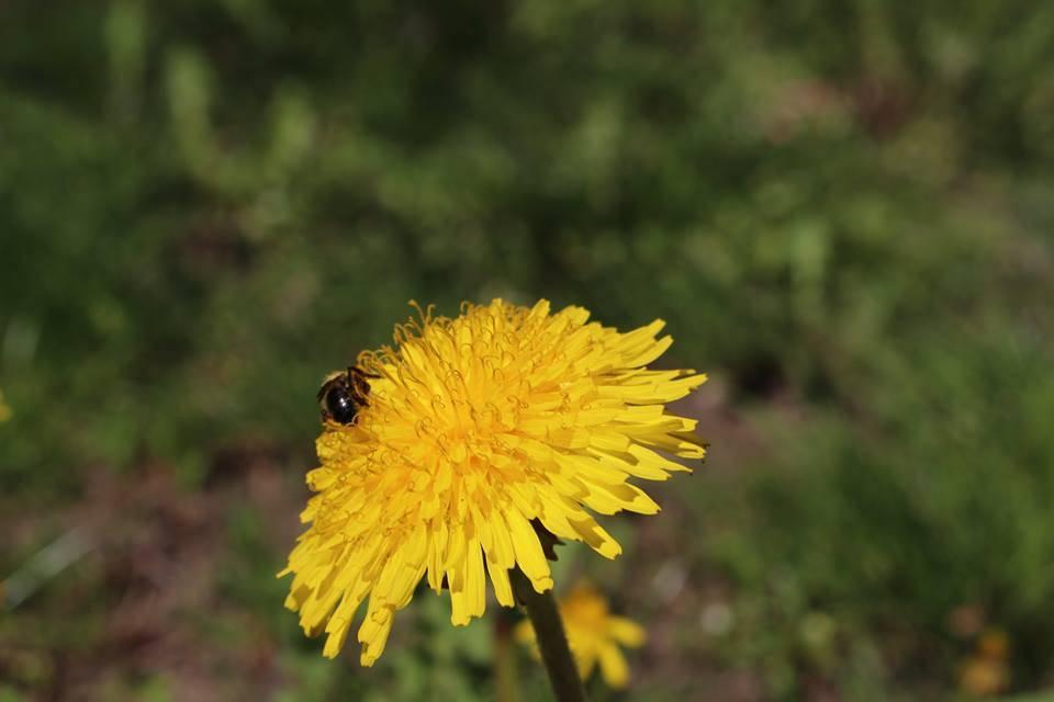 Насекомо и цвете