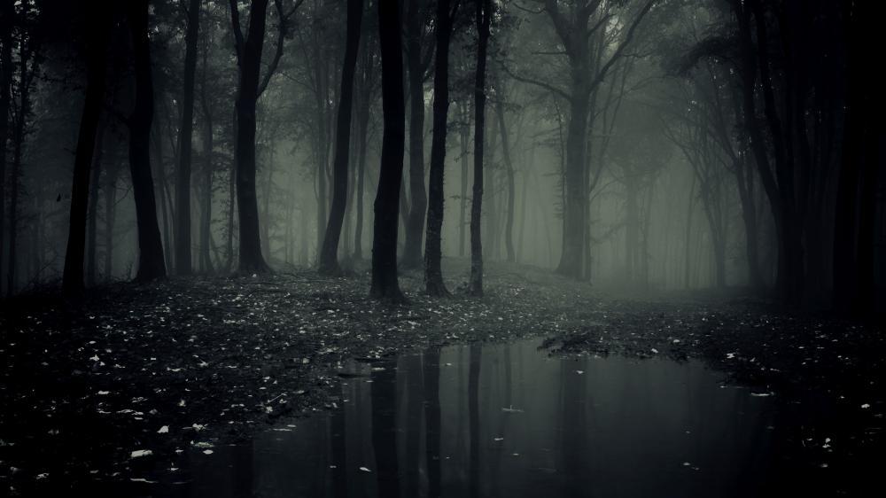 Dark-Forest-11.jpg