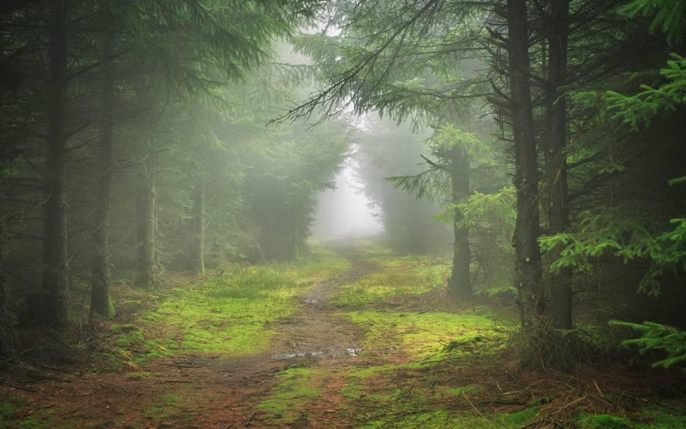 тропинка-в-хвойном-лесу.jpg