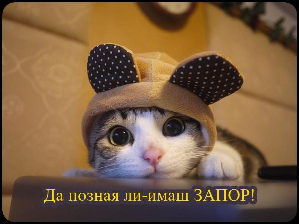 oie_dEyjbBVlR5aK.png