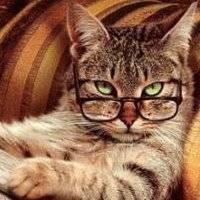 Murmus Cat