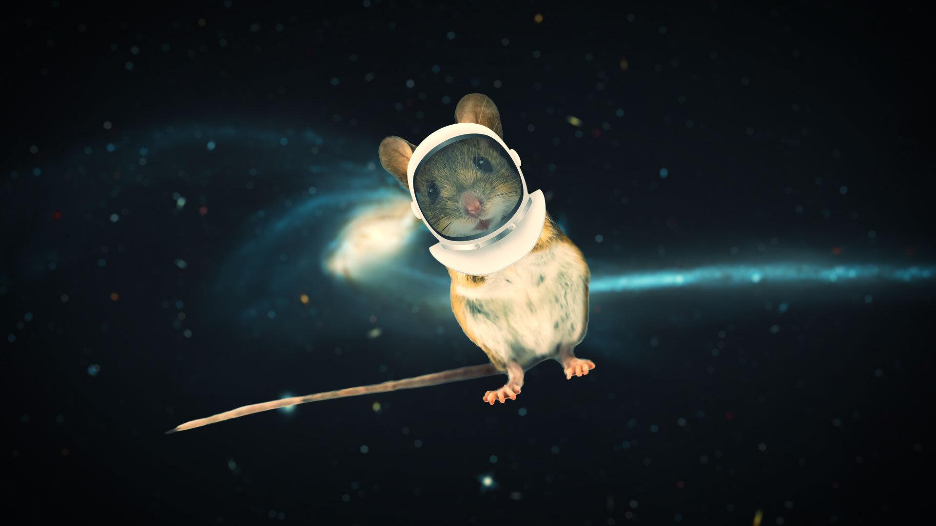 Разбира се, Илън Мъск изпрати своята Тесла в космоса, а