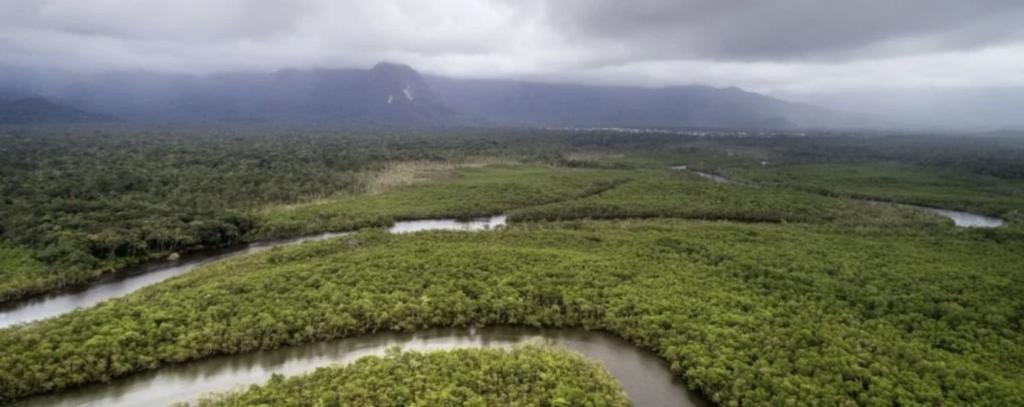 Дъждовните гори в Амазония са на път да станат още